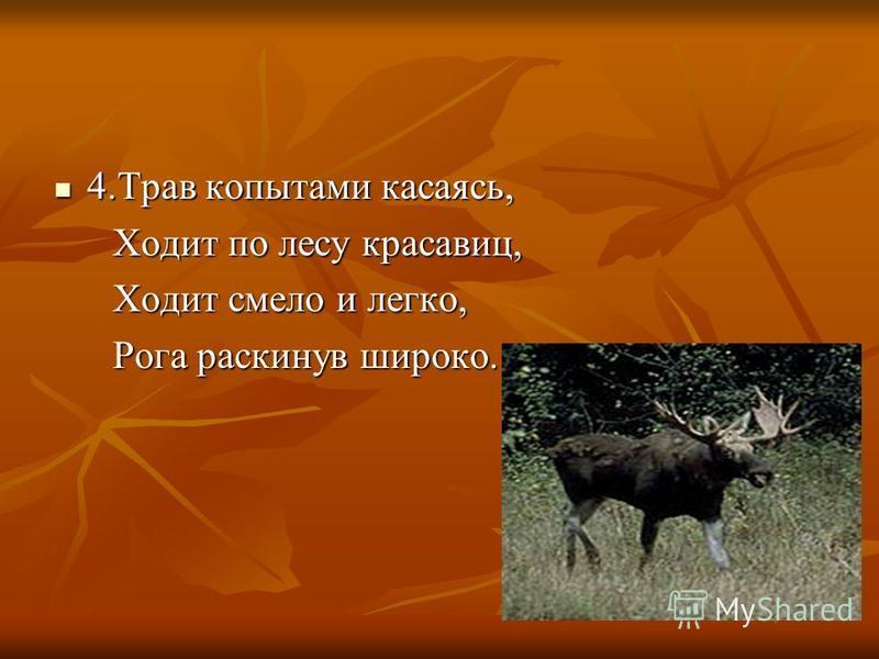 4. Трав копытами касаясь, Ходит по лесу красавиц, Ходит смело и легко, Рога раскинув широко.