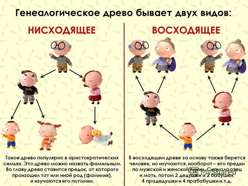Чтобы создать генеалогическое древо надо как можно более подробно опросить старших членов семьи об их предках и родственных связях и записать полученную информацию.
