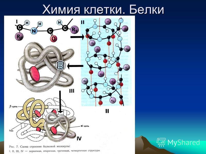 Химия клетки. Белки