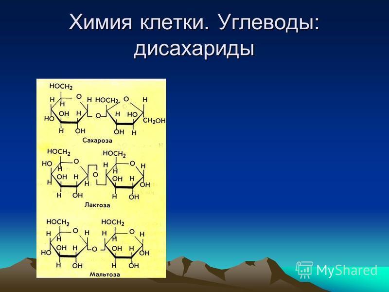 Химия клетки. Углеводы: дисахариды