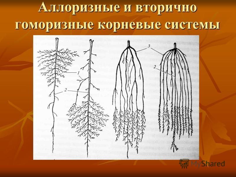 Аллоризные и вторично гоморизные корневые системы