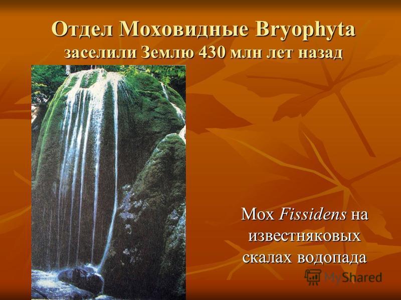 Отдел Моховидные Bryophyta заселили Землю 430 млн лет назад Мох Fissidens на известняковых скалах водопада