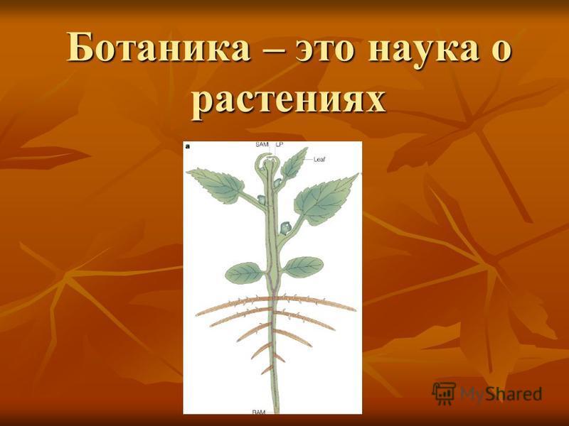 Ботаника – это наука о растениях