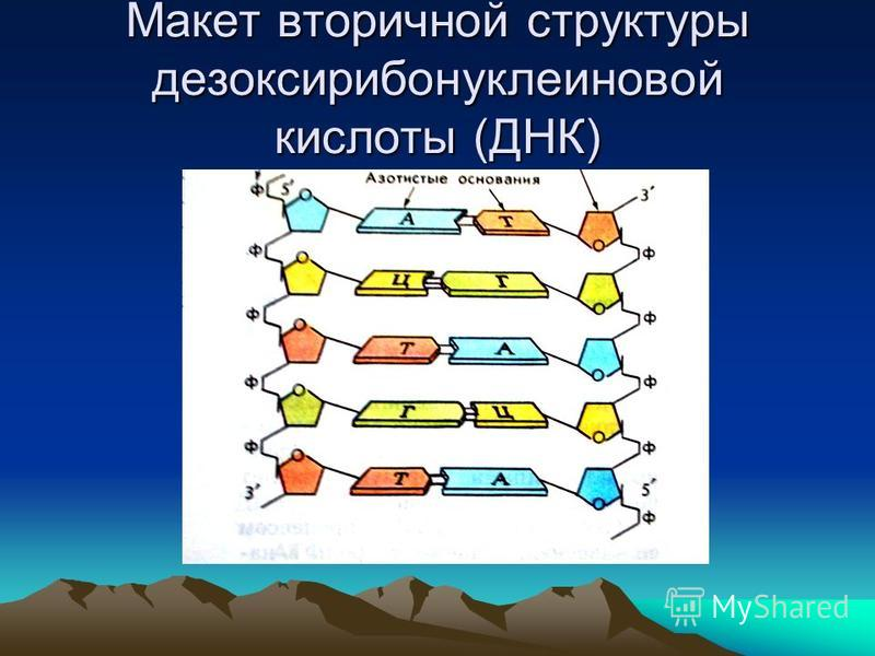 Макет вторичной структуры дезоксирибонуклеиновой кислоты (ДНК)