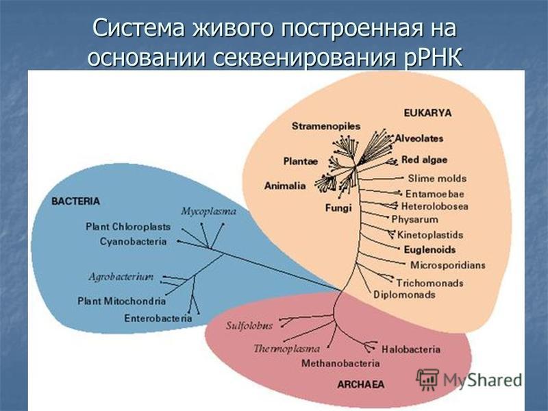 Система живого построенная на основании секвенирования рРНК