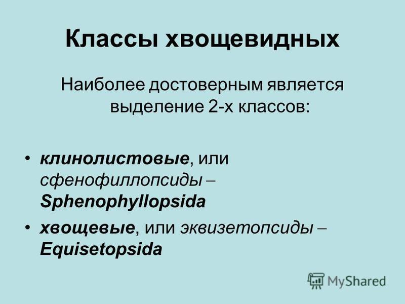 Классы хвощевидных Наиболее достоверным является выделение 2-х классов: кино листовые, или сфенофиллопсиды Sphenophyllopsida хвощовые, или эквизетопсиды Equisetopsida