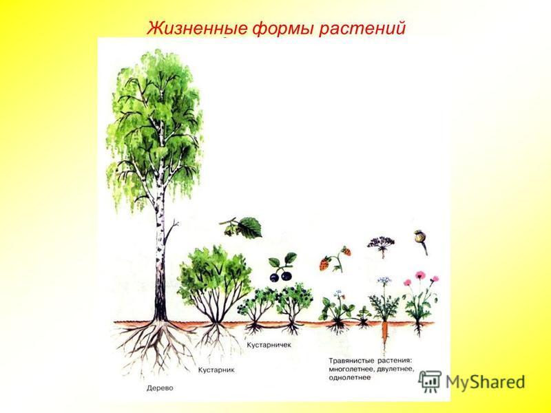 Жизненные формы растений