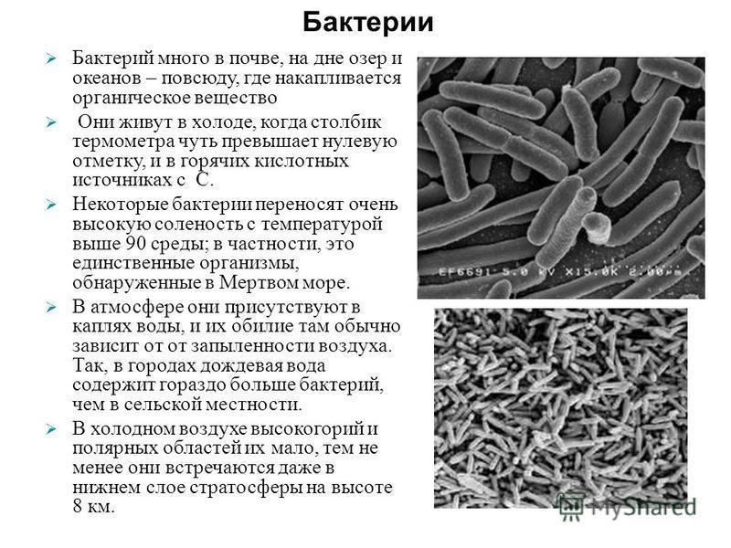 Бактерий много в почве, на дне озер и океанов – повсюду, где накапливается органическое вещество Они живут в холоде, когда столбик термометра чуть превышает нулевую отметку, и в горячих кислотных источниках с С. Некоторые бактерии переносят очень выс