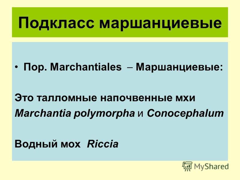 Подкласс маршанциевые Пор. Marchantiales Маршанциевые: Это талломные напочвенные мхи Marchantia polymorpha и Conocephalum Водный мох Riccia