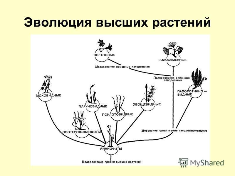 Эволюция высших растений
