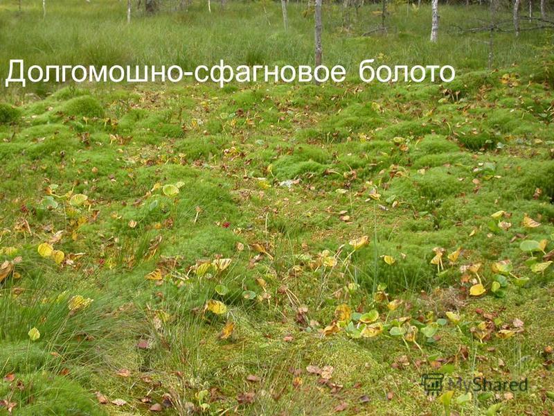 Долгомошно-сфагновое болото