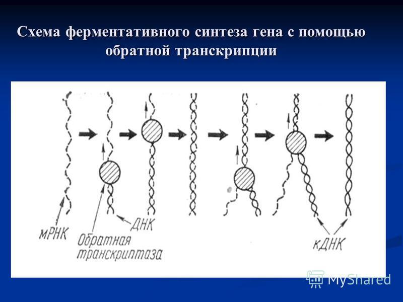 Схема ферментативного синтеза гена с помощью обратной транскрипции