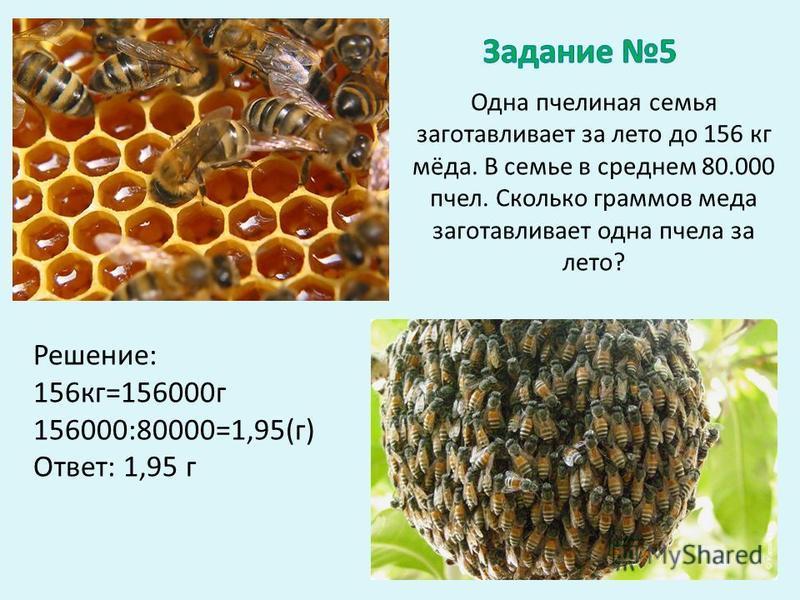Одна пчелиная семья заготавливает за лето до 156 кг мёда. В семье в среднем 80.000 пчел. Сколько граммов меда заготавливает одна пчела за лето? Решение: 156 кг=156000 г 156000:80000=1,95(г) Ответ: 1,95 г