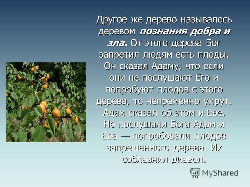Другое же дерево называлось деревом познания добра и зла. От этого дерева Бог запретил людям есть плоды. Он сказал Адаму, что если они не послушают Его и попробуют плодов с этого дерева, то непременно умрут. Адам сказал об этом и Еве. Не послушали Бо