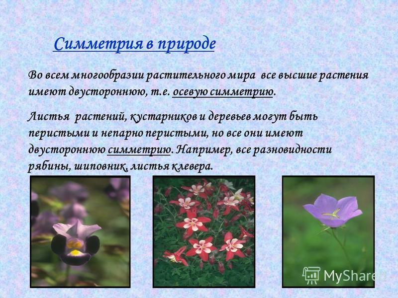 Симметрия в природе Во всем многообразии растительного мира все высшие растения имеют двустороннюю, т.е. осевую симметрию. Листья растений, кустарников и деревьев могут быть перистыми и непарно перистыми, но все они имеют двустороннюю симметрию. Напр