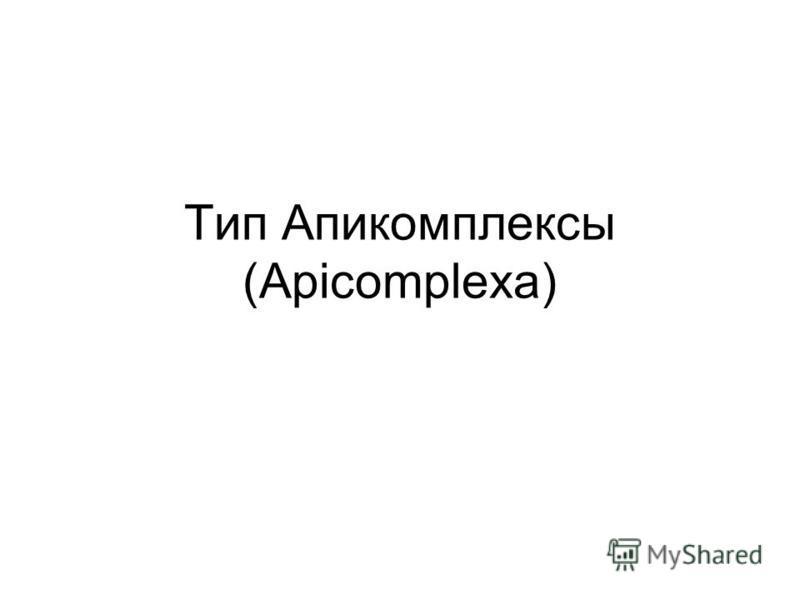 Тип Апикомплексы (Apicomplexa)