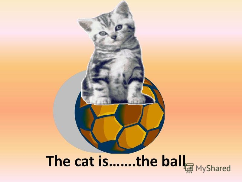 The cat is…….the ball on
