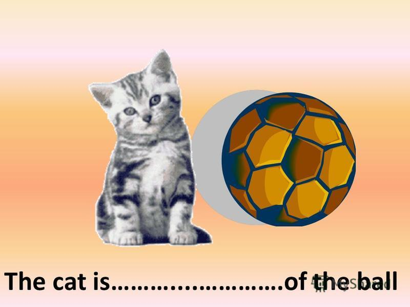 The cat is………....………….of the ball on the left of