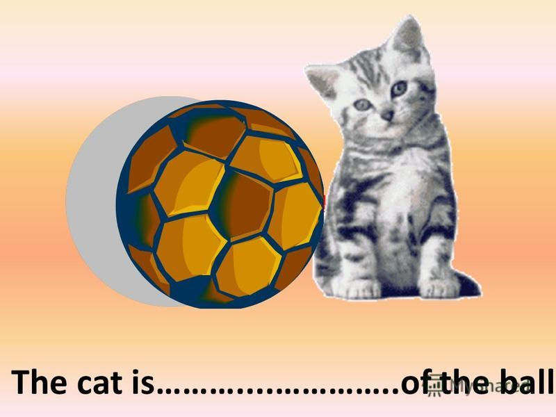 on the right of The cat is………....…………..of the ball