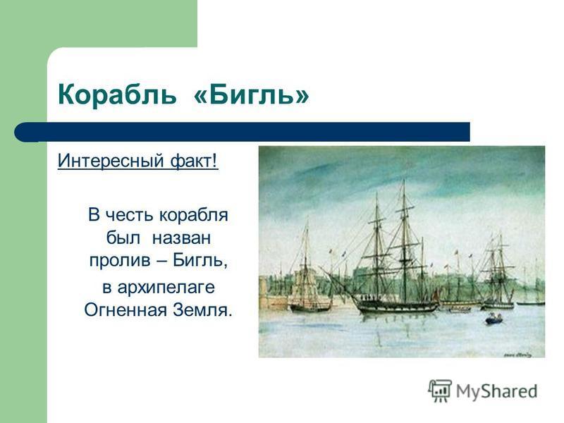Корабль «Бигль» Интересный факт! В честь корабля был назван пролив – Бигль, в архипелаге Огненная Земля.