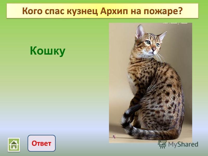 Ответ Кошку