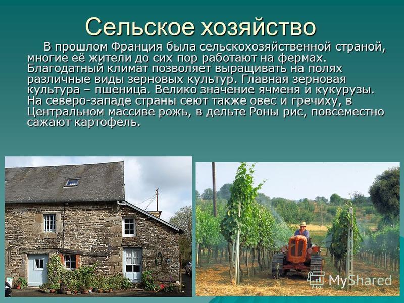 Сельское хозяйство В прошлом Франция была сельскохозяйственной страной, многие её жители до сих пор работают на фермах. Благодатный климат позволяет выращивать на полях различные виды зерновых культур. Главная зерновая культура – пшеница. Велико знач