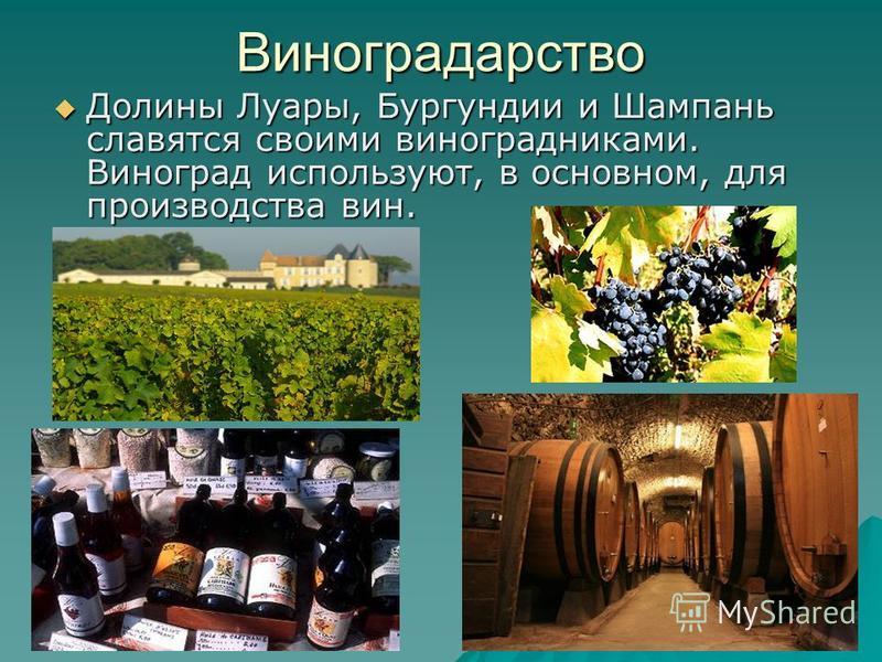 Виноградарство Долины Луары, Бургундии и Шампань славятся своими виноградниками. Виноград используют, в основном, для производства вин. Долины Луары, Бургундии и Шампань славятся своими виноградниками. Виноград используют, в основном, для производств