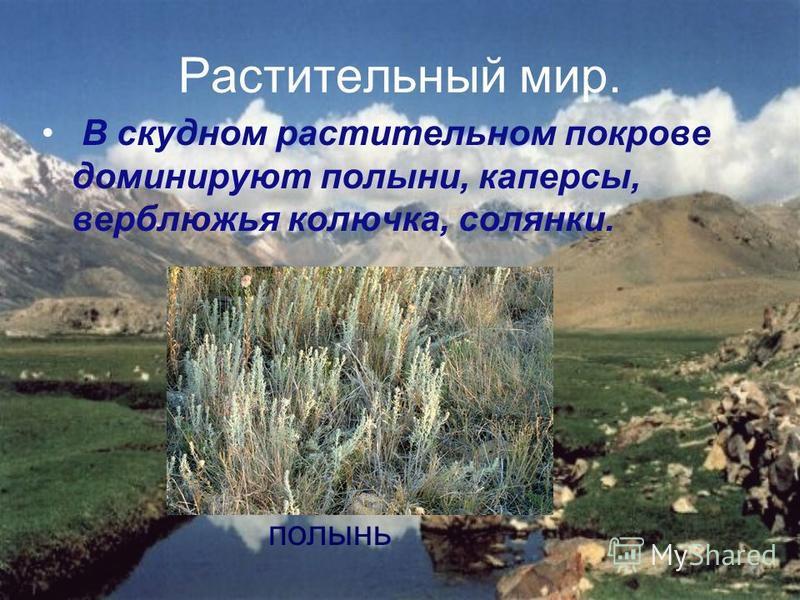 Растительный мир. В скудном растительном покрове доминируют полыни, каперсы, верблюжья колючка, солянки. полынь