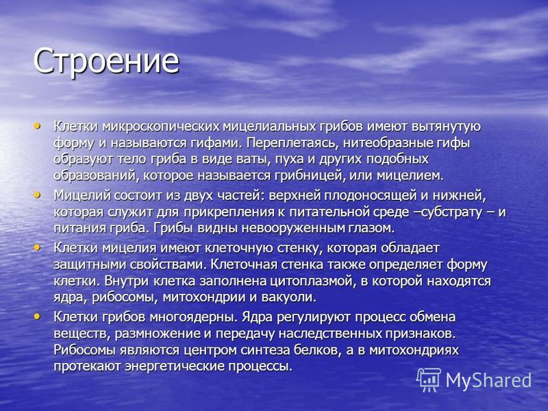 Микота