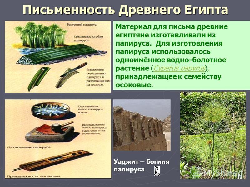 Письменность Древнего Египта Материал для письма древние египтяне изготавливали из папируса. Для изготовления папируса использовалось одноимённое водно-болотное растение (Cyperus papyrus), принадлежащее к семейству осоковые.Cyperus papyrus Уаджит – б