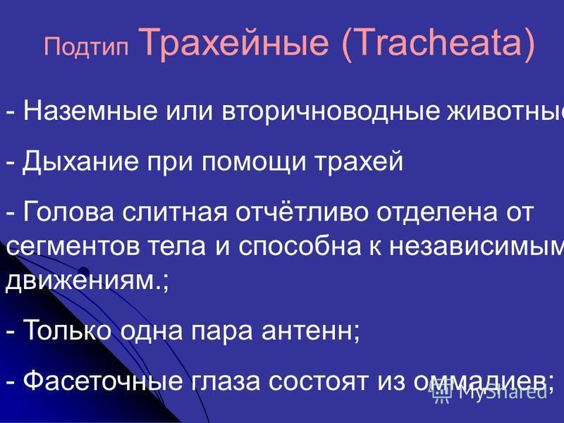 Подтип Трахейные (Tracheata) - Наземные или вторичноводные животные; - Дыхание при помощи трахей - Голова слитная отчётливо отделена от сегменттов тела и способна к независимым движениям.; - Только одна пара антенн; - Фасеточные глаза состоят из омма
