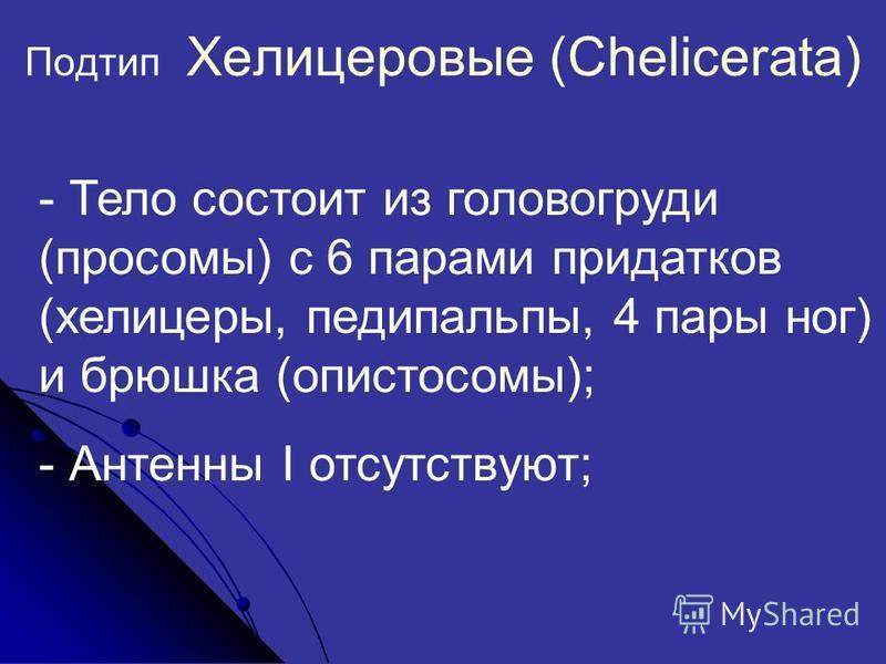 Подтип Хелицеровые (Chelicerata) - Тело состоит из головогруди (просомы) с 6 парами придатков (хелицеры, педипальпы, 4 пары ног) и брюшка (опистосомы); - Антенны I отсутствуют;