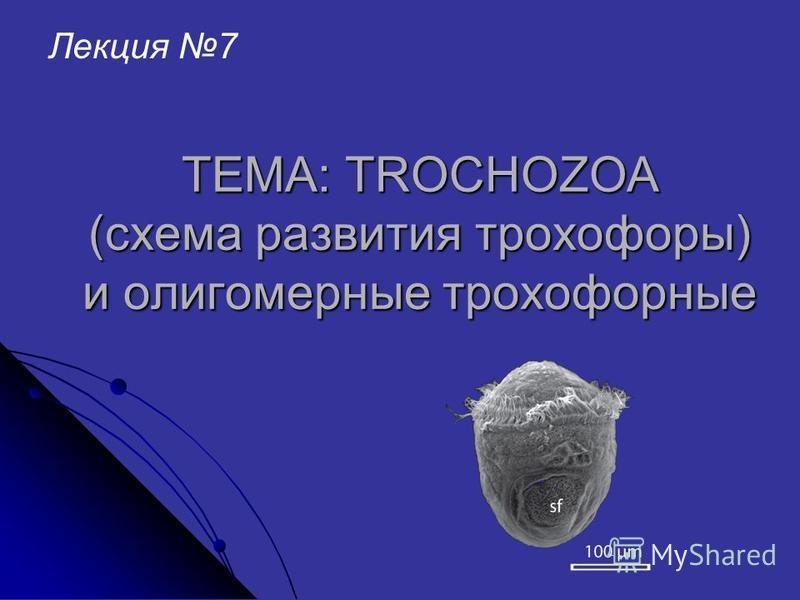 ТЕМА: TROCHOZOA (схема развития трохофоры) и олигомерные трохофорные Лекция 7