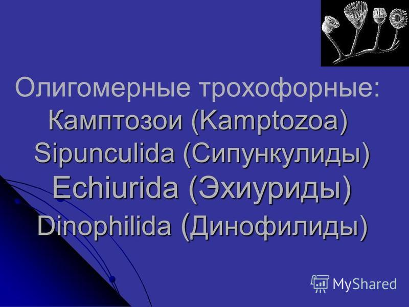 Камптозои (Kamptozoa) Sipunculida (Сипункулиды) Echiurida (Эхиуриды) Dinophilida ( Динофилиды) Олигомерные трохофорные: Камптозои (Kamptozoa) Sipunculida (Сипункулиды) Echiurida (Эхиуриды) Dinophilida ( Динофилиды)