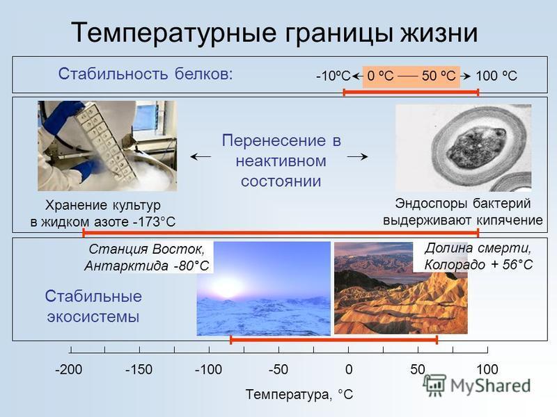 Температурные границы жизни Стабильность белков: -10ºC100 ºC0 ºC50 ºC Станция Восток, Антарктида -80°C Долина смерти, Колорадо + 56°C Перенесение в неактивном состоянии Хранение культур в жидком азоте -173°C Эндоспоры бактерий выдерживают кипячение -