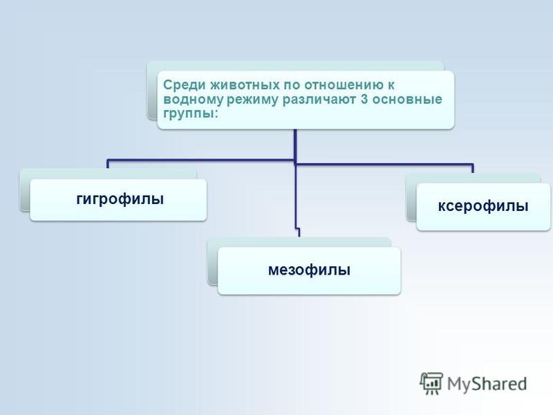 Среди животных по отношению к водному режиму различают 3 основные группы: гигрофилы ксерофилы мезофилы