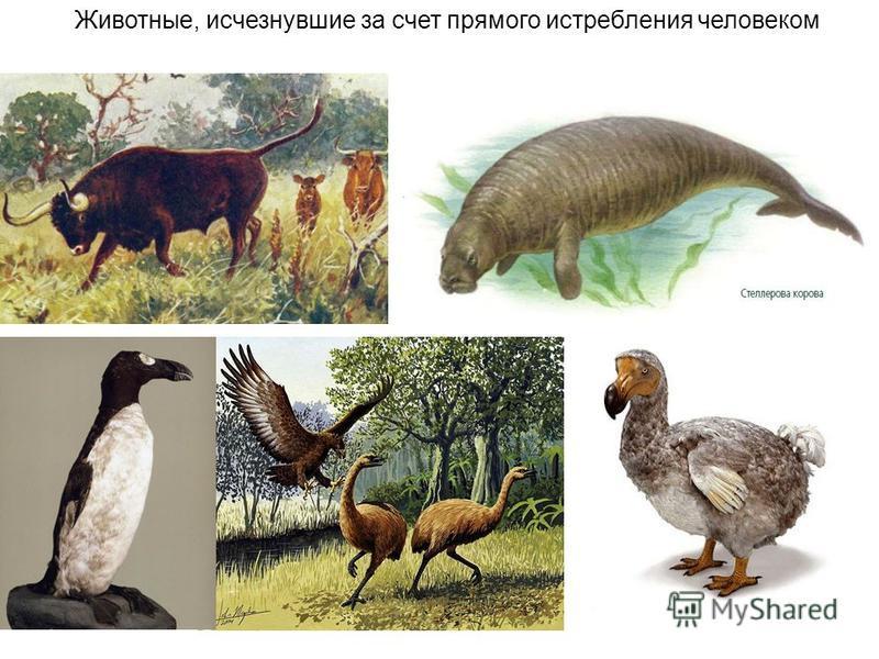 Животные, исчезнувшие за счет прямого истребления человеком