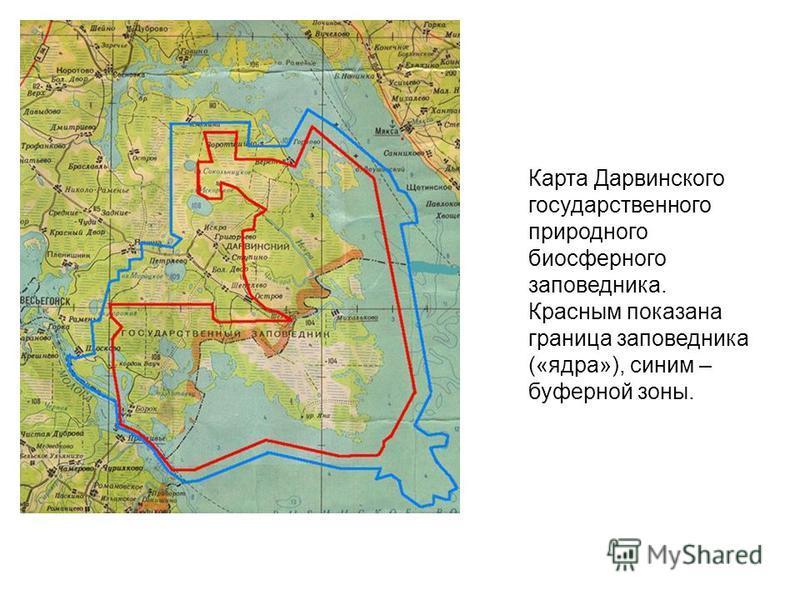 Карта Дарвинского государственного природного биосферного заповедника. Красным показана граница заповедника («ядра»), синим – буферной зоны.