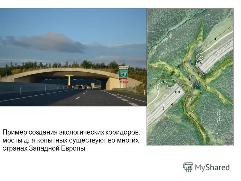 Пример создания экологических коридоров: мосты для копытных существуют во многих странах Западной Европы