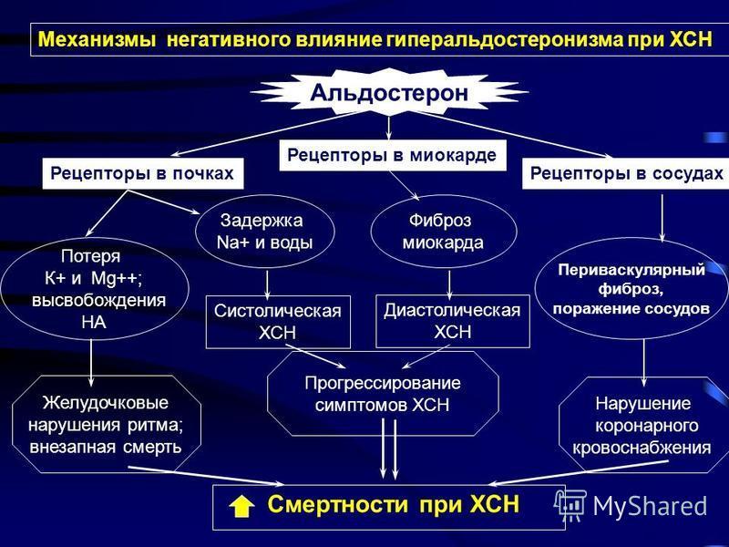 Смертности при ХСН Рецепторы в почках Альдостерон Рецепторы в миокарде Рецепторы в сосудах Потеря К+ и Mg++; высвобождения НА Задержка Na+ и воды Фиброз миокарда Периваскулярный фиброз, поражение сосудов Систолическая ХСН Диастолическая ХСН Нарушение