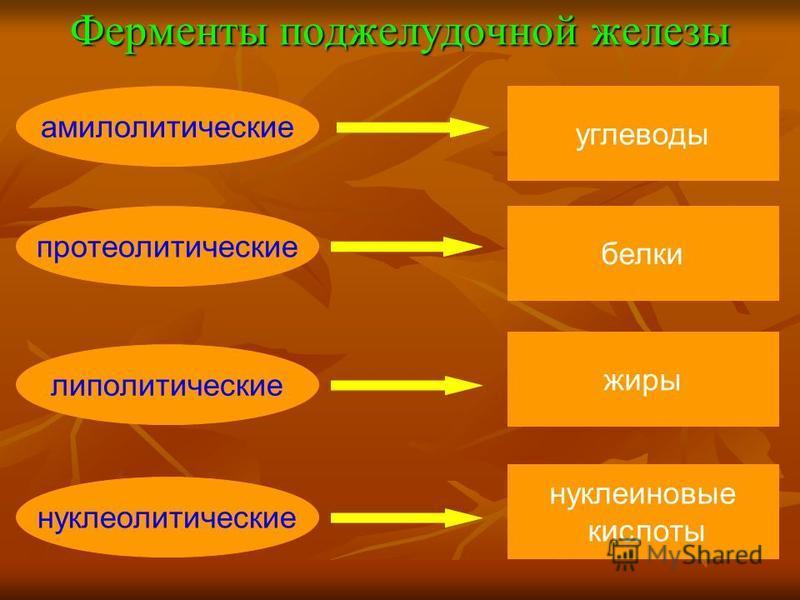 Ферменты поджелудочной железы амилолитические протеолитические липолитические нуклеолитические углеводы белки жиры нуклеиновые кислоты