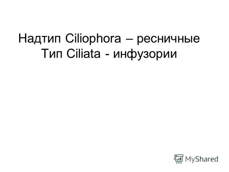 Надтип Ciliophora – ресничные Тип Ciliata - инфузории