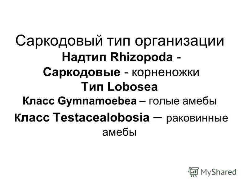 Саркодовый тип организации Надтип Rhizopoda - Саркодовые - корненожки Тип Lobosea Класс Gymnamoebea – голые амебы К ласс Testacealobosia – раковинные амебы
