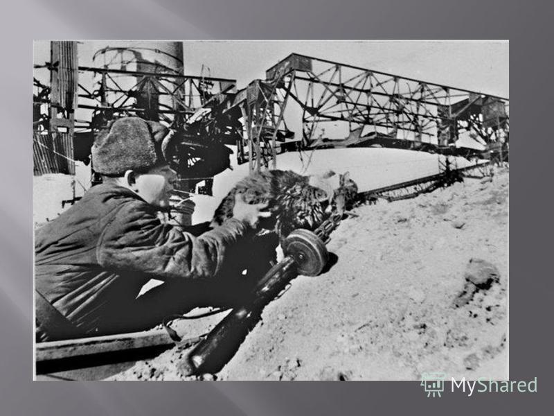 После прорыва блокады в январе 1943 года власти провели спецоперацию : в Ярославской области было собрано четыре вагона дымчатых кошек, которых перебросили в осажденный город