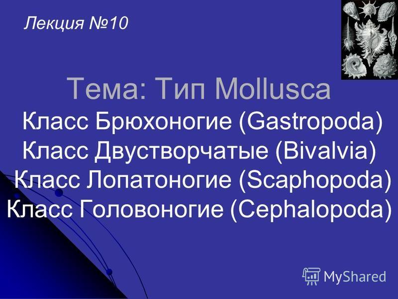 Тема: Тип Mollusca Класс Брюхоногие (Gastropoda) Класс Двустворчатые (Bivalvia) Класс Лопатоногие (Scaphopoda) Класс Головоногие (Cephalopoda) Лекция 10