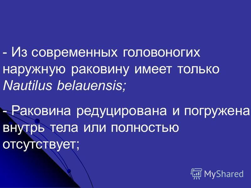 - Из современных головоногих наружную раковину имеет только Nautilus belauensis; - Раковина редуцирована и погружена внутрь тела или полностью отсутствует;