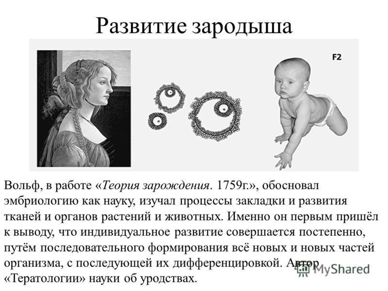 Развитие зародыша Вольф, в работе «Теория зарождения. 1759 г.», обосновал эмбриологию как науку, изучал процессы закладки и развития тканей и органов растений и животных. Именно он первым пришёл к выводу, что индивидуальное развитие совершается посте