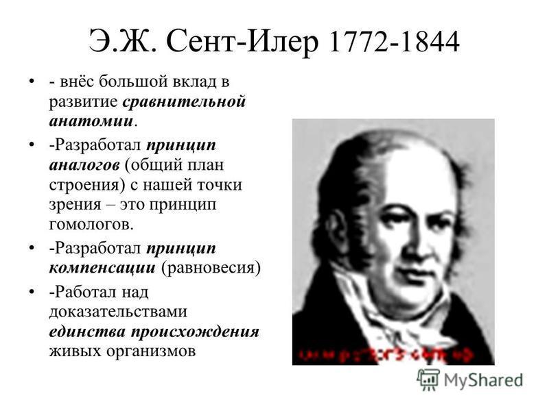 Э.Ж. Сент-Илер 1772-1844 - внёс большой вклад в развитие сравнительной анатомии. -Разработал принцип аналогов (общий план строения) с нашей точки зрения – это принцип гомологов. -Разработал принцип компенсации (равновесия) -Работал над доказательства