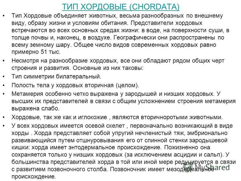 Опорная таблица по типу chordata