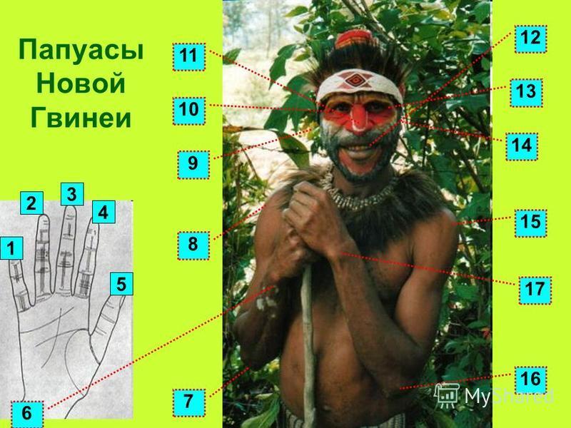 1 4 3 2 5 14 13 9 7 8 10 11 12 15 16 17 Папуасы Новой Гвинеи 6